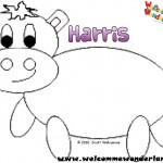 Harris the little grey hippo